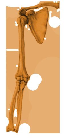 Limb Node